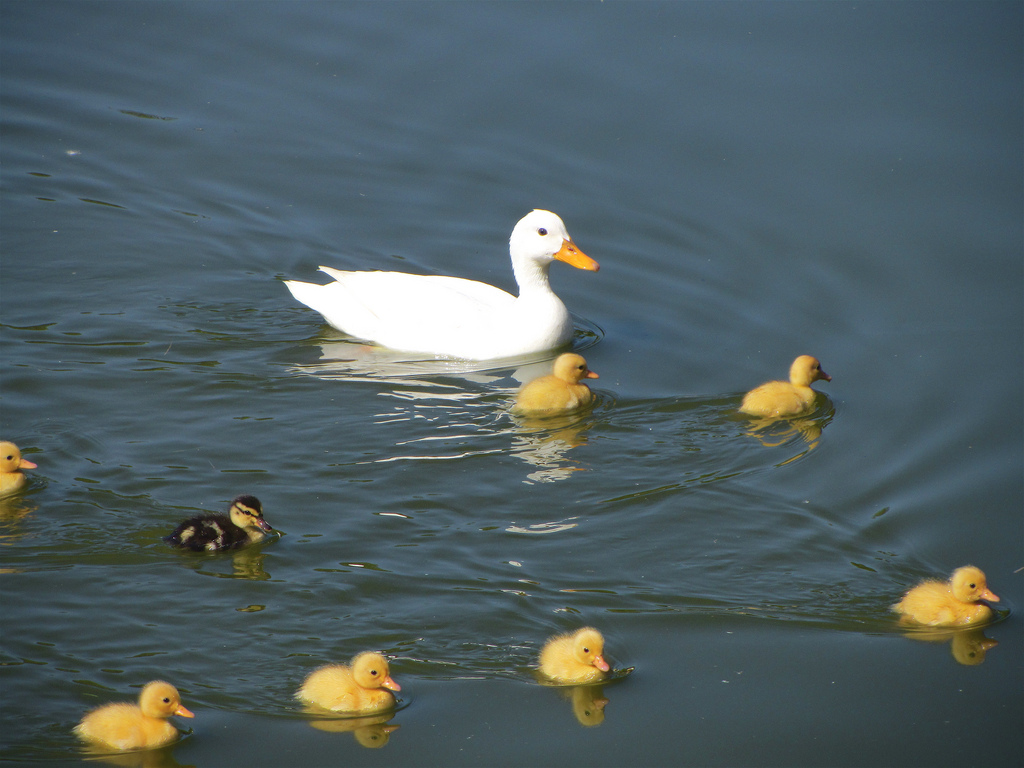 On Duckling Moments
