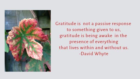Gratitude Is Being Awake