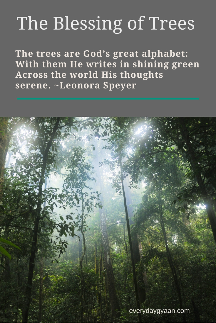 The trees are God's great alphabet: