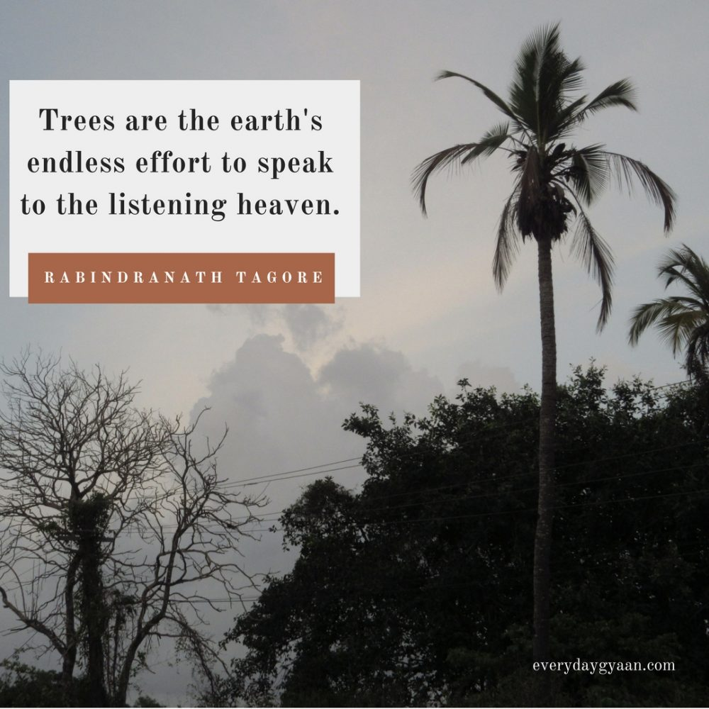 The Blessing Of Trees  #FridayReflections #FTSF #1000Speak