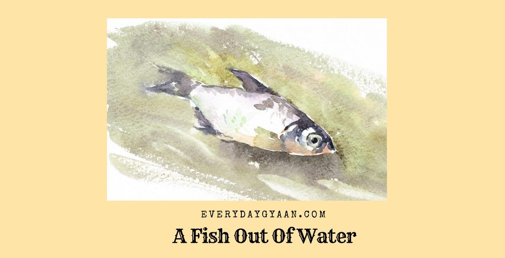 A fish out of water fridayreflections everyday gyaan for A fish out of water