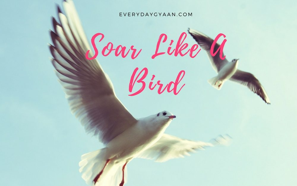 Soar Like A Bird #FridayReflections