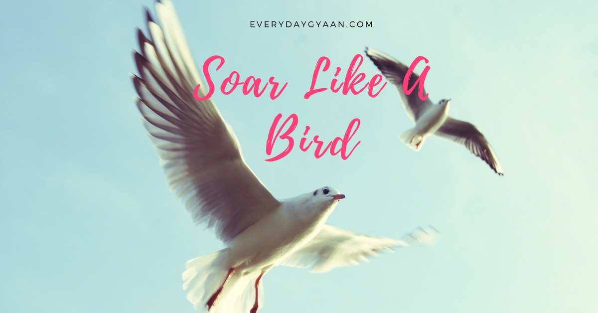 Soar Like A Bird #FridayReflections
