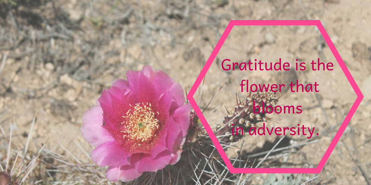 Gratitude Is The Flower That Blooms In Adversity